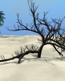 Arbaro - desert